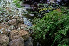 Maiden fern by the stream on the background of stones and tradescantia. The idea of a summer garden design stock photos
