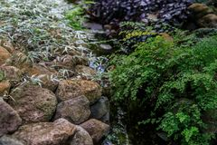 Maiden fern by the stream on the background of stones and tradescantia. The idea of a summer garden design royalty free stock image