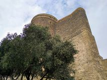 Maiden tower. And alone tree stock photos