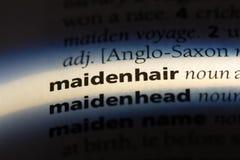 maidenhair fotografia de stock