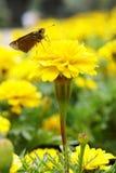 Maidenhair with moth Stock Photo