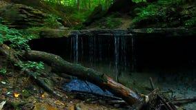Maidenhair Spada cienia stanu park Indiana zdjęcie wideo