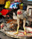 Chicken. For sale in the Cambodia market Stock Photography