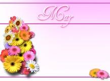 Maifeiertag - Rosa Stockbild