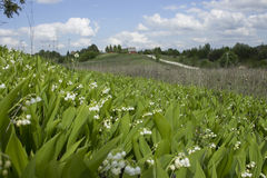 Maiglöckchenblüte nahe dem Dorf Lizenzfreies Stockbild