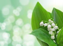 Maiglöckchenblumen Stockfotografie