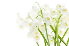 Maiglöckchenblumen auf Weiß Stockbilder
