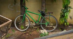 Maigre vert de bicyclette sur l'arbre Jakarta rentré par photo Indonésie Photographie stock
