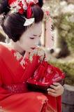 Maiko Royaltyfria Foton