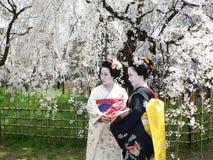 Maiko en kersenbloesem, Kyoto Japan Royalty-vrije Stock Afbeeldingen