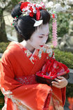 Maiko. Kamishichiken Kyoto, Japan-April 03,2009 Maiko has attent to Baika-sai Festival also Baien Ume Garden Stock Photo
