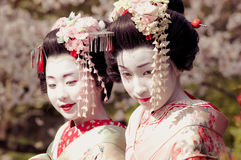 Maiko. Kamishichiken Kyoto, Japan-April 03,2009 Maiko has attent to Baika-sai Festival also Baien Ume Garden Royalty Free Stock Image