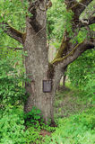 Mail box  in wood Stock Image