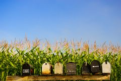 Mail Boxes And A Corn Field Background. Royalty Free Stock Image