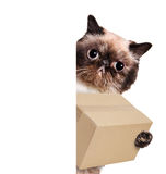 Mail cat in with a big moving box Royalty Free Stock Image