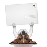 Mail dog royalty free stock image