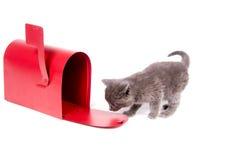 Mail order kitten Stock Photo