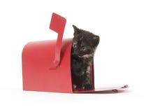 Mail Order Kitten Royalty Free Stock Image