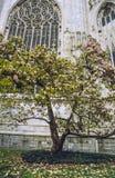 Mailand - Duomo und Magnolie Lizenzfreies Stockbild