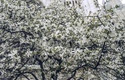 Mailand - Duomo und Magnolie Stockfotografie