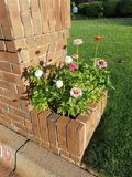 Mailbox garden Stock Images