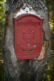 Mailbox into the maw of the tree Royalty Free Stock Photography