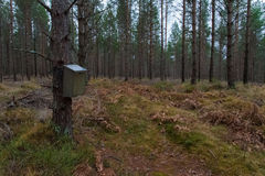 Mailbox in the mittle of a forest Royalty Free Stock Images