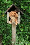 Mailbox puppy Royalty Free Stock Images