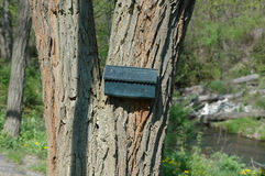 Mailbox on Tree. Black mailbox on tree royalty free stock photos