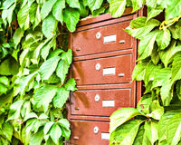 Mailboxes on the wall between the grape leaves Stock Images
