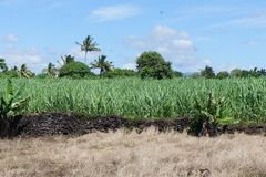 The main agricultural crop on the island of Mauritius is sugar cane. Panorama of the landscape on the South-East coast of Mauritius royalty free stock images