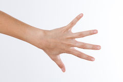 Main arrière montrant les cinq doigts d'isolement sur un blanc photographie stock libre de droits