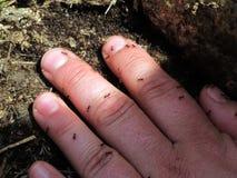 Main avec des fourmis Photos libres de droits