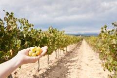Main avec des raisins Photo libre de droits