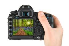 Main avec l'appareil-photo et forêt Hallerbos à Bruxelles Belgique mon pH Photos stock