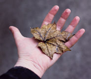 Main avec la lame d'automne Images stock