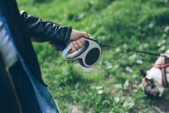 Main avec le bouledogue français d'avance de laisse Photos stock