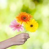 Main avec le bouquet de fleur Photographie stock