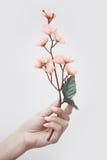 Main avec Sakura Photographie stock libre de droits