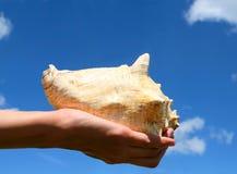 Main avec un seashell photos stock