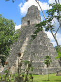 Main building of old maya ruin. S in the Peten jungle - Tikal - Guatemala Stock Images