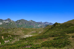 Main Caucasian Ridge and green grass alpine meadows with rhododendron Stock Photos