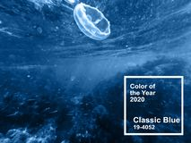 Main color trend 2020 classic blue. underwater jellyfish in the blue water of the sea with fish