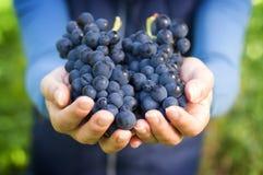Main complètement des raisins rouges Photos libres de droits