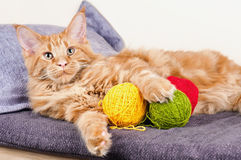Main Coon cat with balls of wool. Main Coon cat lying with balls of wool Royalty Free Stock Photography
