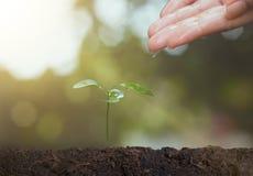 Main d'agriculteur arrosant la jeune jeune plante sur le sol pour l'élevage Concept Photographie stock libre de droits