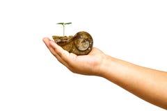 Main d'enfant tenant des mollusques et crustacés de croûte avec la jeune plante verte Images libres de droits