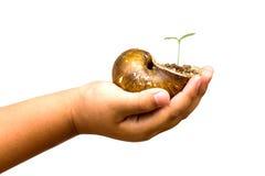 Main d'enfant tenant des mollusques et crustacés de croûte avec la jeune plante verte Image stock