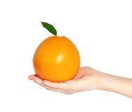 Main d'isolement de femme tenant une orange ou un pamplemousse avec le le vert Image stock