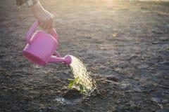 Main d'un homme arrosant peu de plante verte sur la terre sèche criquée Images libres de droits